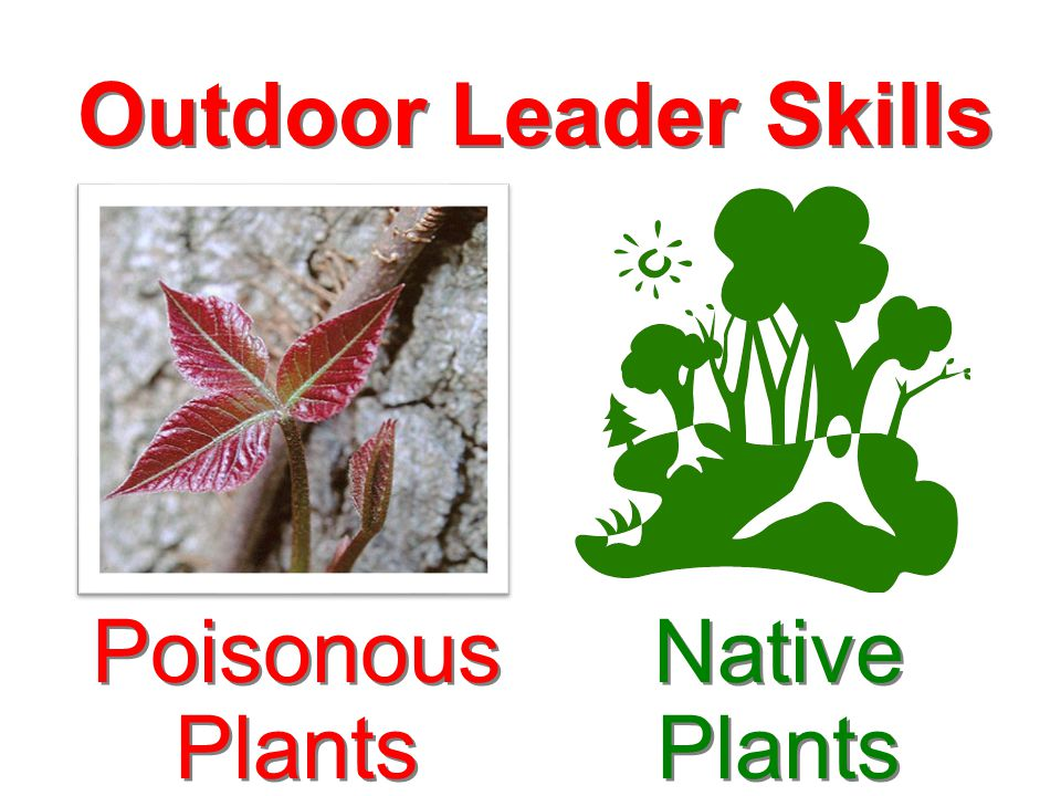 Outdoor Leader Skills Native Plants Poisonous Plants