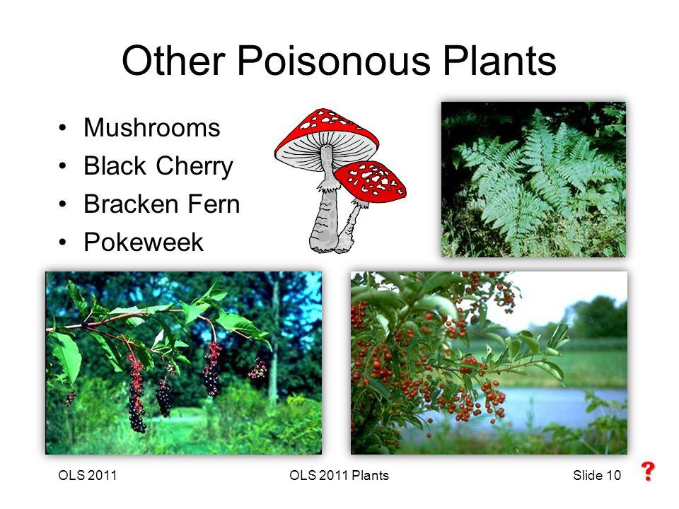 OLS 2011OLS 2011 PlantsSlide 10 Other Poisonous Plants Mushrooms Black Cherry Bracken Fern Pokeweek 