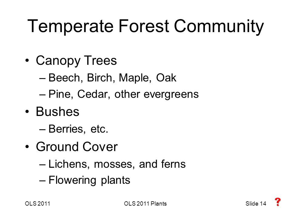 Temperate Forest Community Canopy Trees –Beech, Birch, Maple, Oak –Pine, Cedar, other evergreens Bushes –Berries, etc.