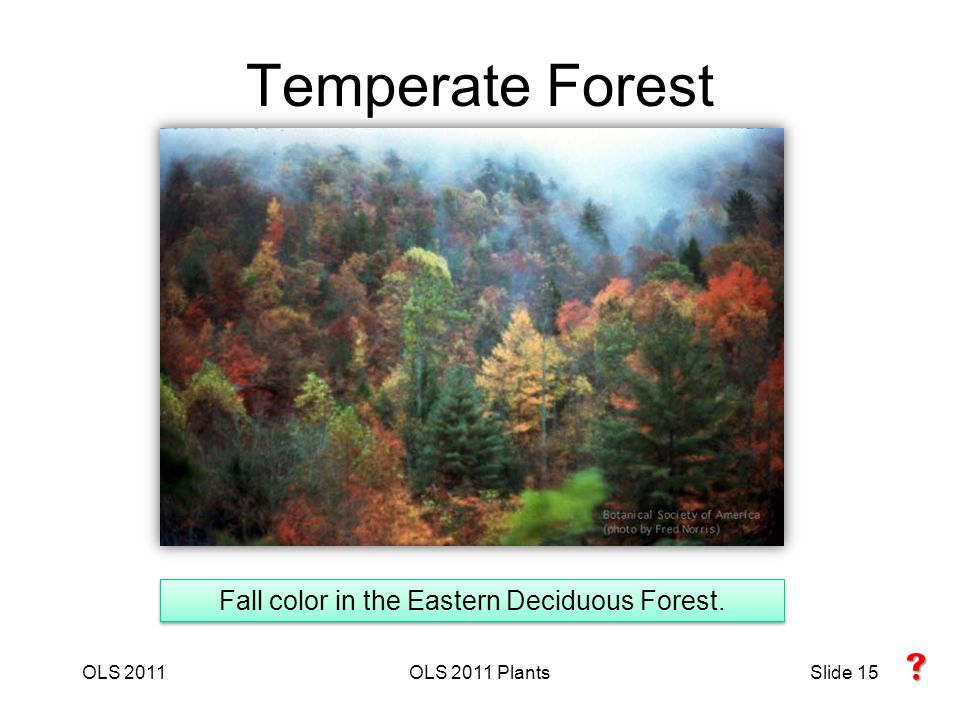 OLS 2011OLS 2011 PlantsSlide 15 Temperate Forest Fall color in the Eastern Deciduous Forest. 
