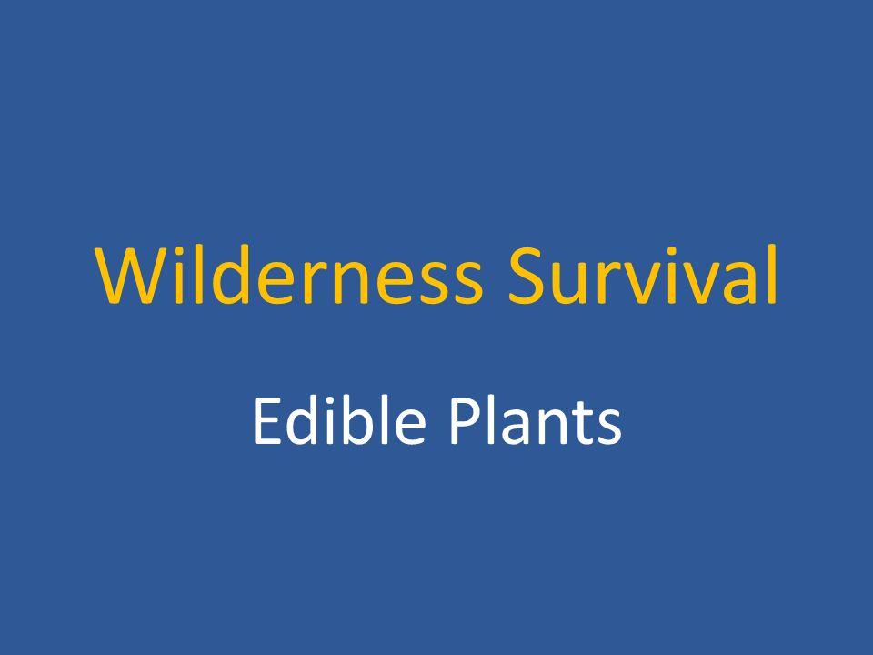 Wilderness Survival Edible Plants