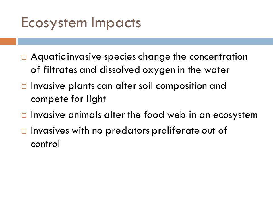Ecosystem Impacts  Aquatic invasive species change the concentration of filtrates and dissolved oxygen in the water  Invasive plants can alter soil