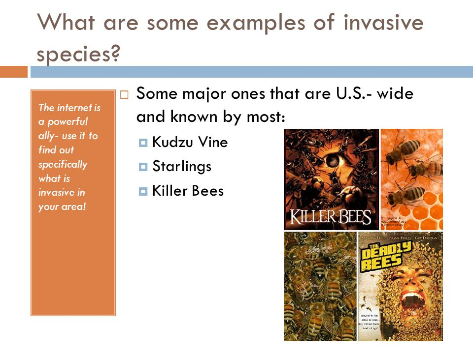 What are some examples of invasive species.