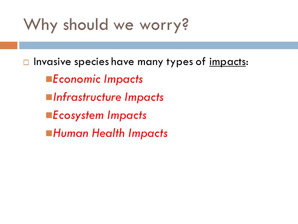 Why should we worry?  Invasive species have many types of impacts: Economic Impacts Infrastructure Impacts Ecosystem Impacts Human Health Impacts