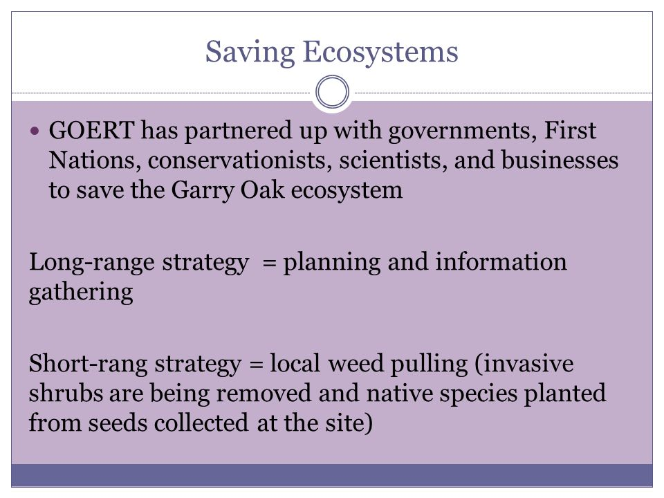 Saving Ecosystems GOERT has partnered up with governments, First Nations, conservationists, scientists, and businesses to save the Garry Oak ecosystem Long-range strategy = planning and information gathering Short-rang strategy = local weed pulling (invasive shrubs are being removed and native species planted from seeds collected at the site)