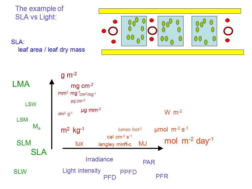 The example of SLA vs Light: Light intensity Irradiance PFD PPFD PAR PFR µmol m -2 s -1 mol m -2 day -1 W m -2 lux cal cm -2 s -1 langley min -1 lumen