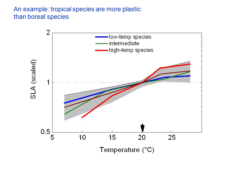 An example: tropical species are more plastic than boreal species