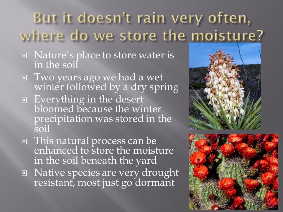  Nature's place to store water is in the soil  Two years ago we had a wet winter followed by a dry spring  Everything in the desert bloomed because the winter precipitation was stored in the soil  This natural process can be enhanced to store the moisture in the soil beneath the yard  Native species are very drought resistant, most just go dormant