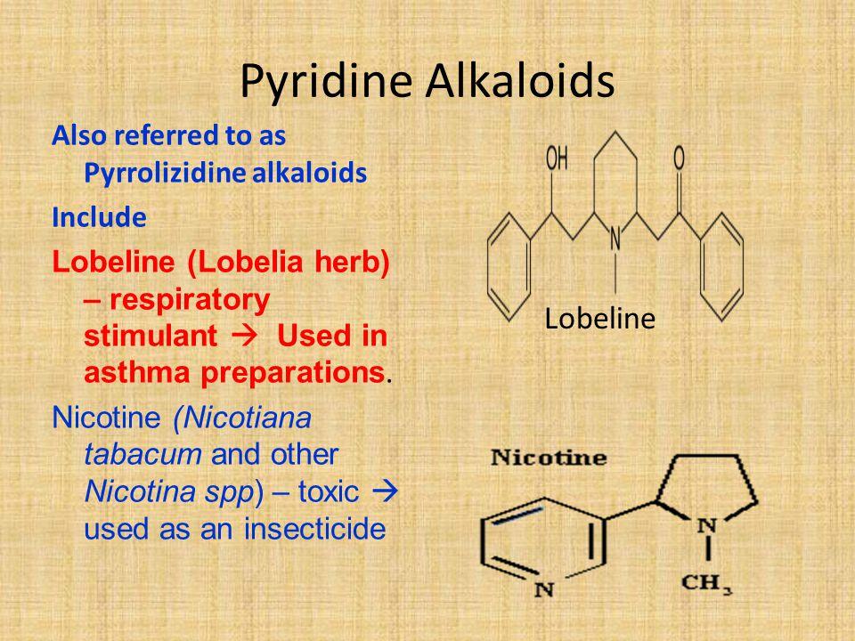 Pyridine Alkaloids Also referred to as Pyrrolizidine alkaloids Include Lobeline (Lobelia herb) – respiratory stimulant  Used in asthma preparations.