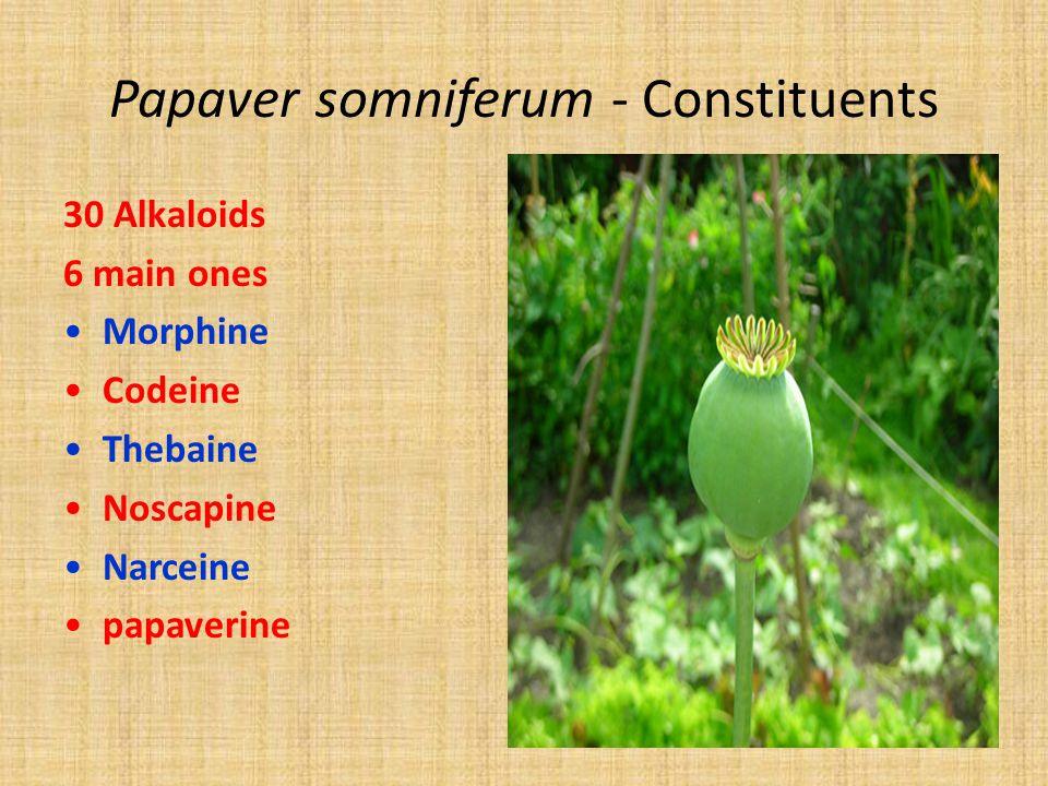 Papaver somniferum - Constituents 30 Alkaloids 6 main ones Morphine Codeine Thebaine Noscapine Narceine papaverine