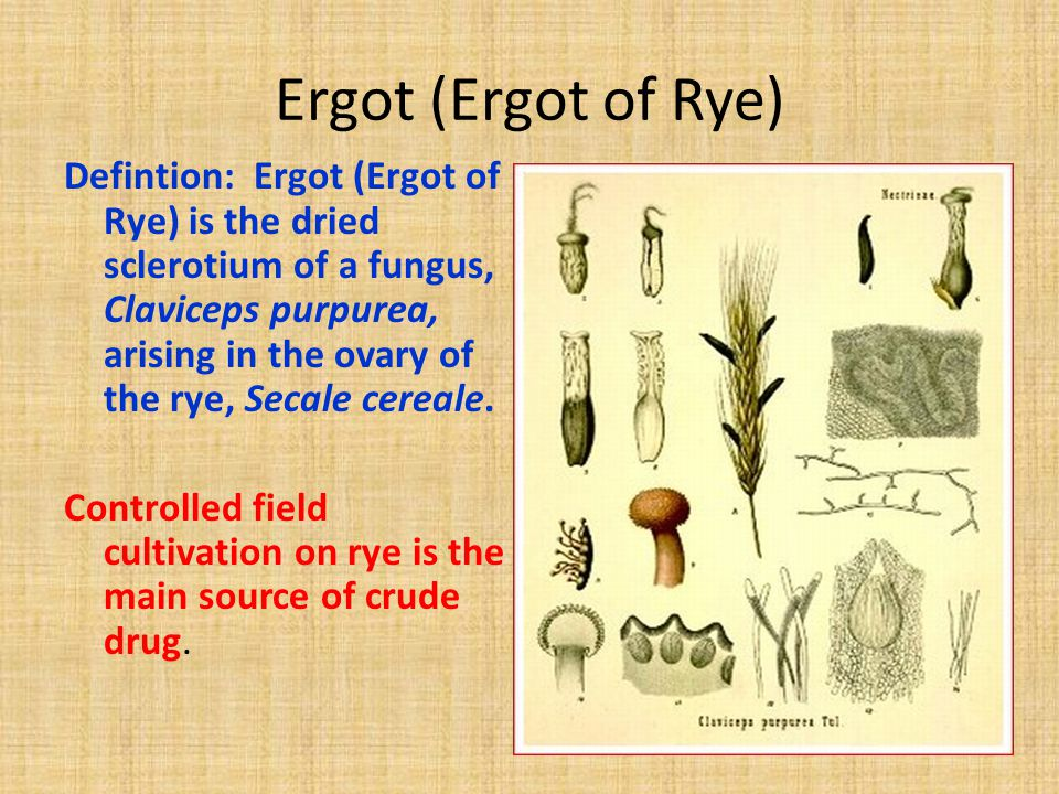 Ergot (Ergot of Rye) Defintion: Ergot (Ergot of Rye) is the dried sclerotium of a fungus, Claviceps purpurea, arising in the ovary of the rye, Secale