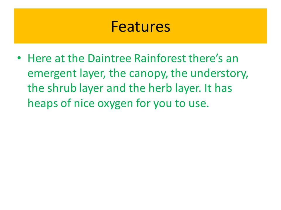 Features Here at the Daintree Rainforest there's an emergent layer, the canopy, the understory, the shrub layer and the herb layer.