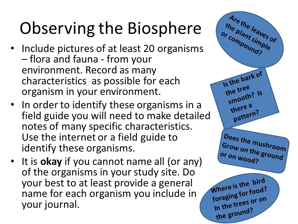 Observing the Biosphere Include pictures of at least 20 organisms – flora and fauna - from your environment. Record as many characteristics as possibl