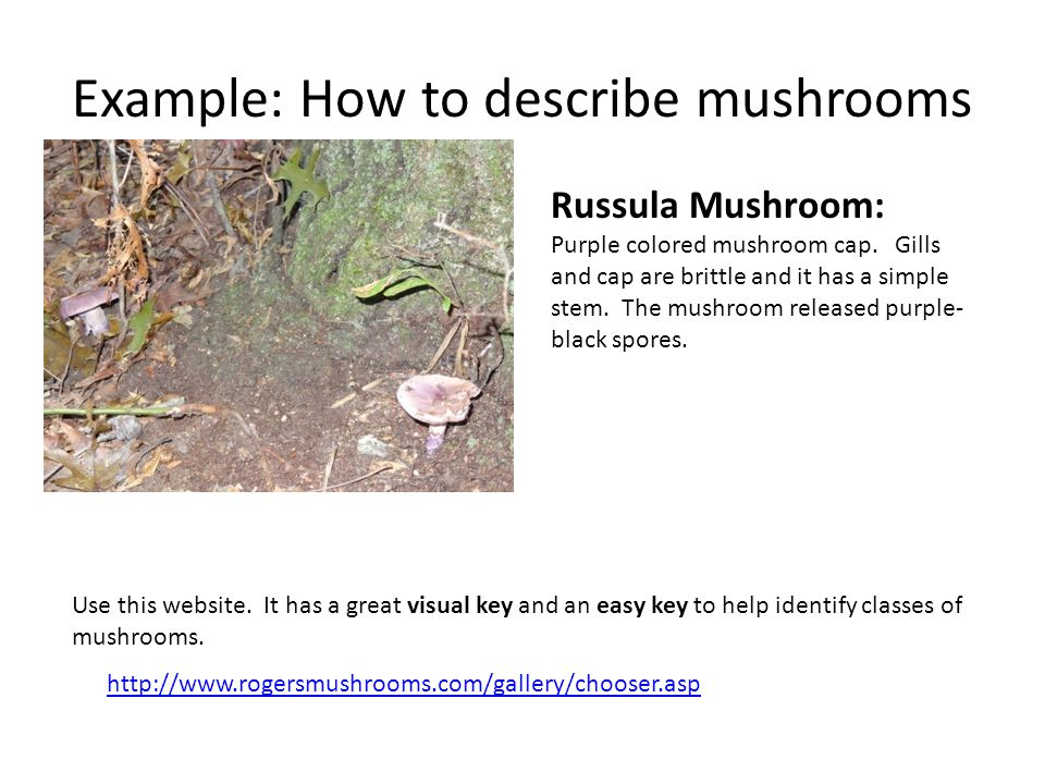 Example: How to describe mushrooms Russula Mushroom: Purple colored mushroom cap. Gills and cap are brittle and it has a simple stem. The mushroom rel