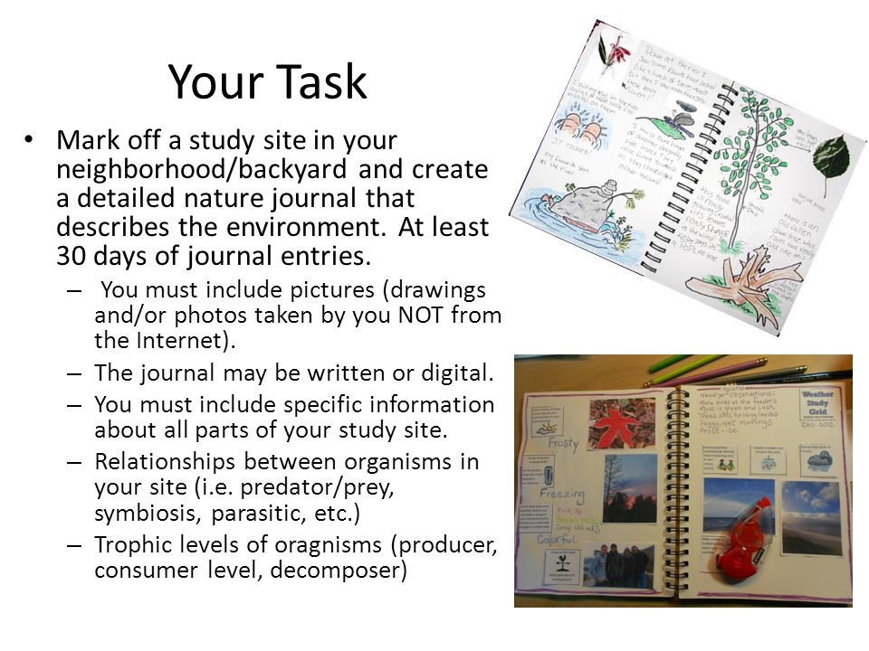 Your Task Mark off a study site in your neighborhood/backyard and create a detailed nature journal that describes the environment. At least 30 days of