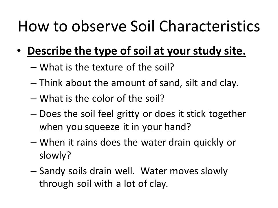 How to observe Soil Characteristics Describe the type of soil at your study site. – What is the texture of the soil? – Think about the amount of sand,