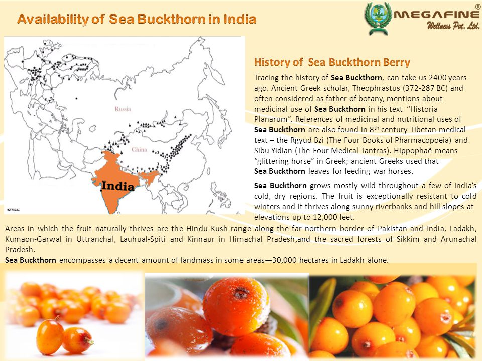 Vitamins in Sea Buckthorn help in cleaning and whitening effect on teeth.