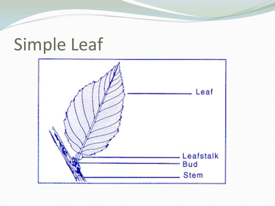 Simple Leaf