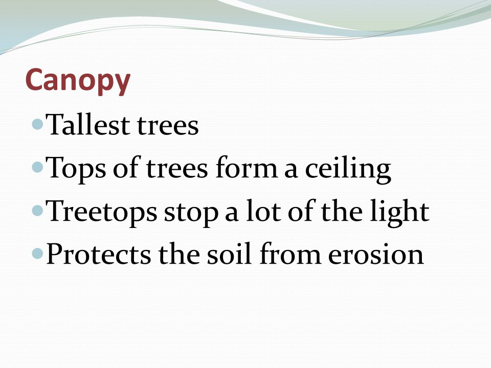 Tallest trees Tops of trees form a ceiling Treetops stop a lot of the light Protects the soil from erosion