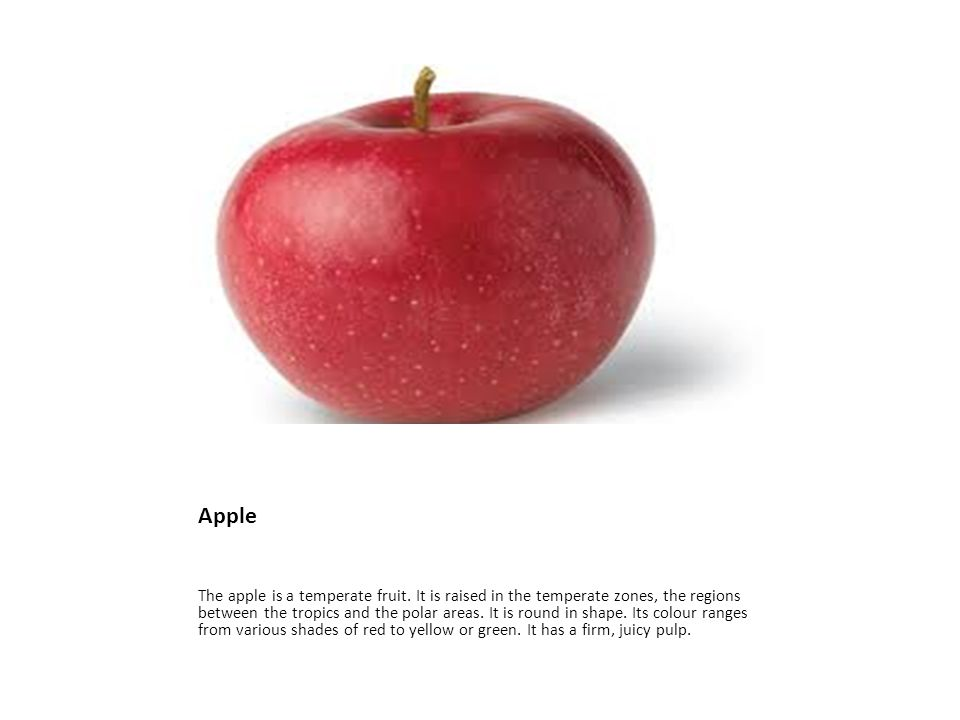 Apple The apple is a temperate fruit.