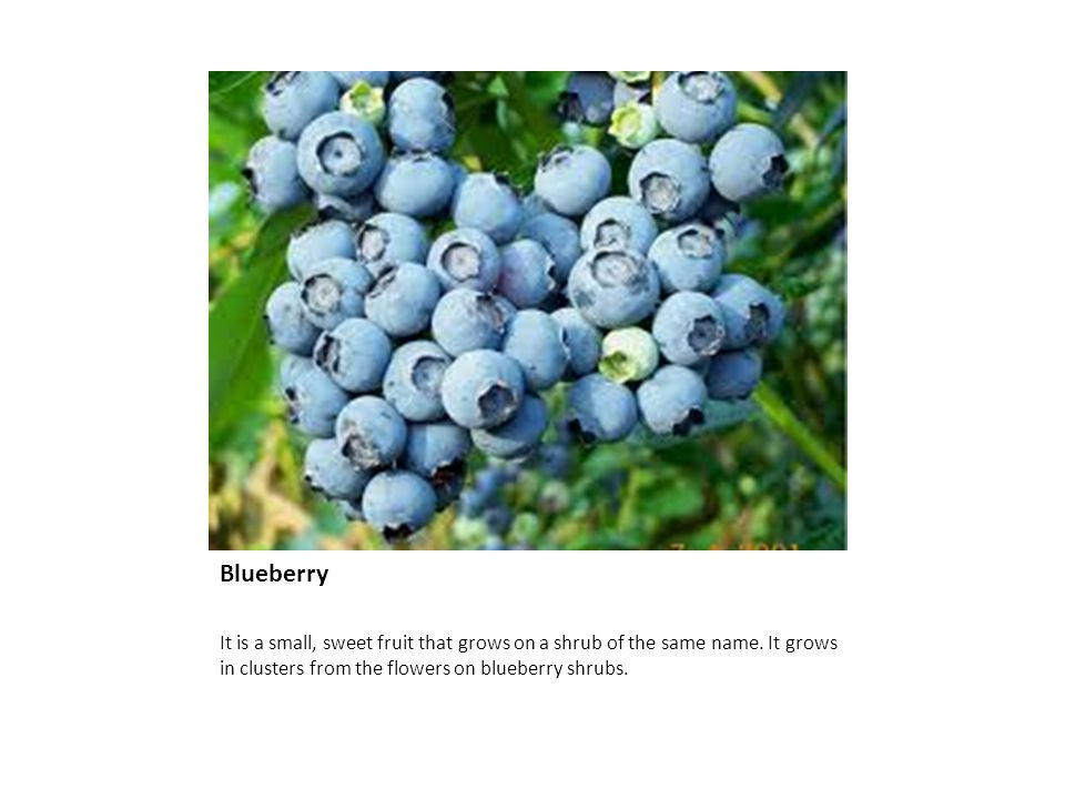 Blueberry Blueberry It is a small, sweet fruit that grows on a shrub of the same name.