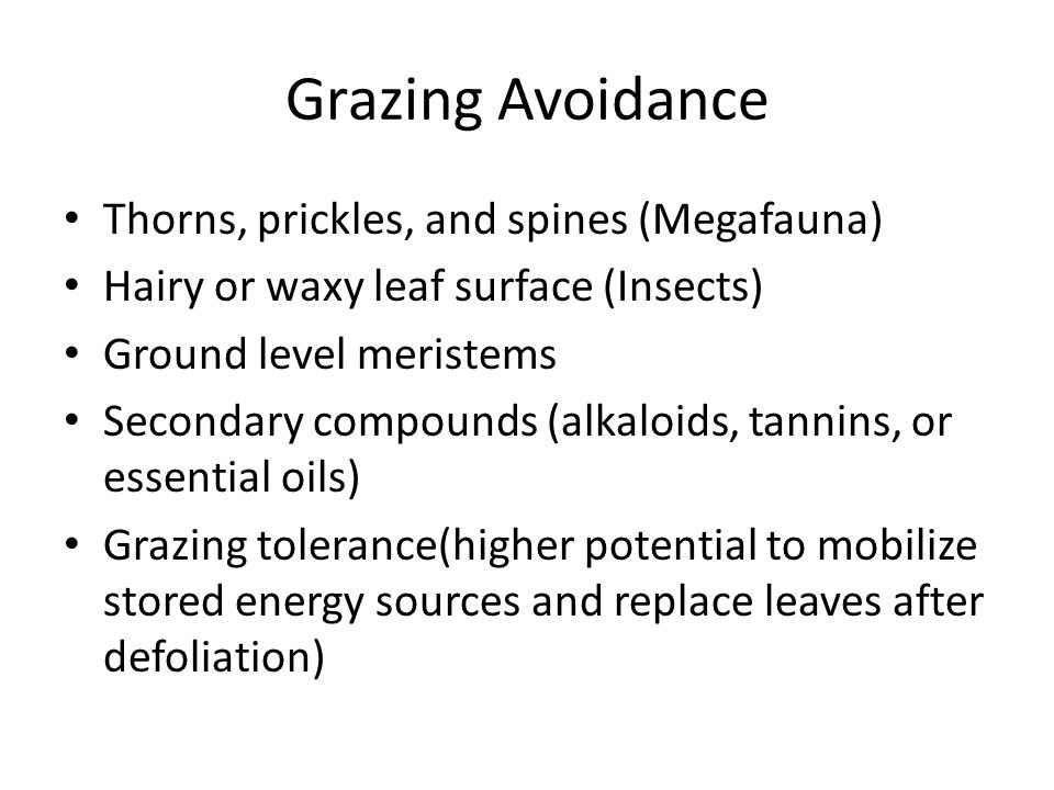 Grazing Avoidance Thorns, prickles, and spines (Megafauna) Hairy or waxy leaf surface (Insects) Ground level meristems Secondary compounds (alkaloids, tannins, or essential oils) Grazing tolerance(higher potential to mobilize stored energy sources and replace leaves after defoliation)