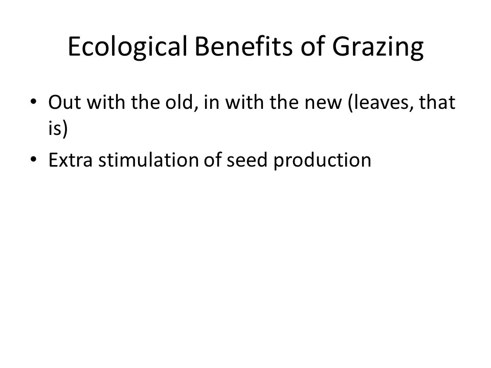 Ecological Benefits of Grazing Out with the old, in with the new (leaves, that is) Extra stimulation of seed production