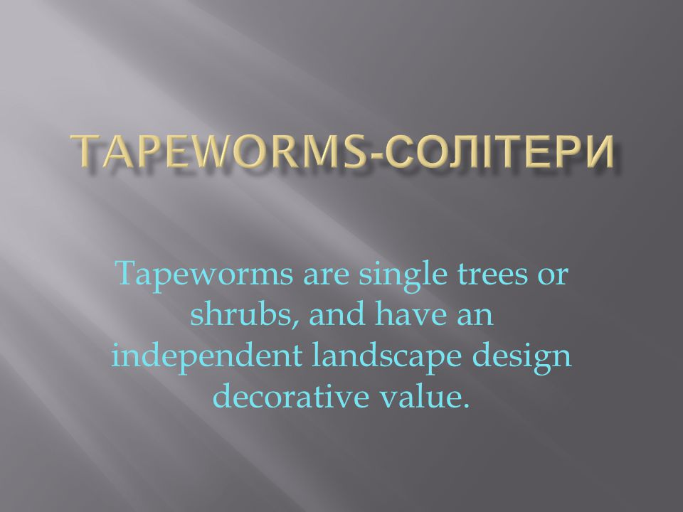 Tapeworms are single trees or shrubs, and have an independent landscape design decorative value.