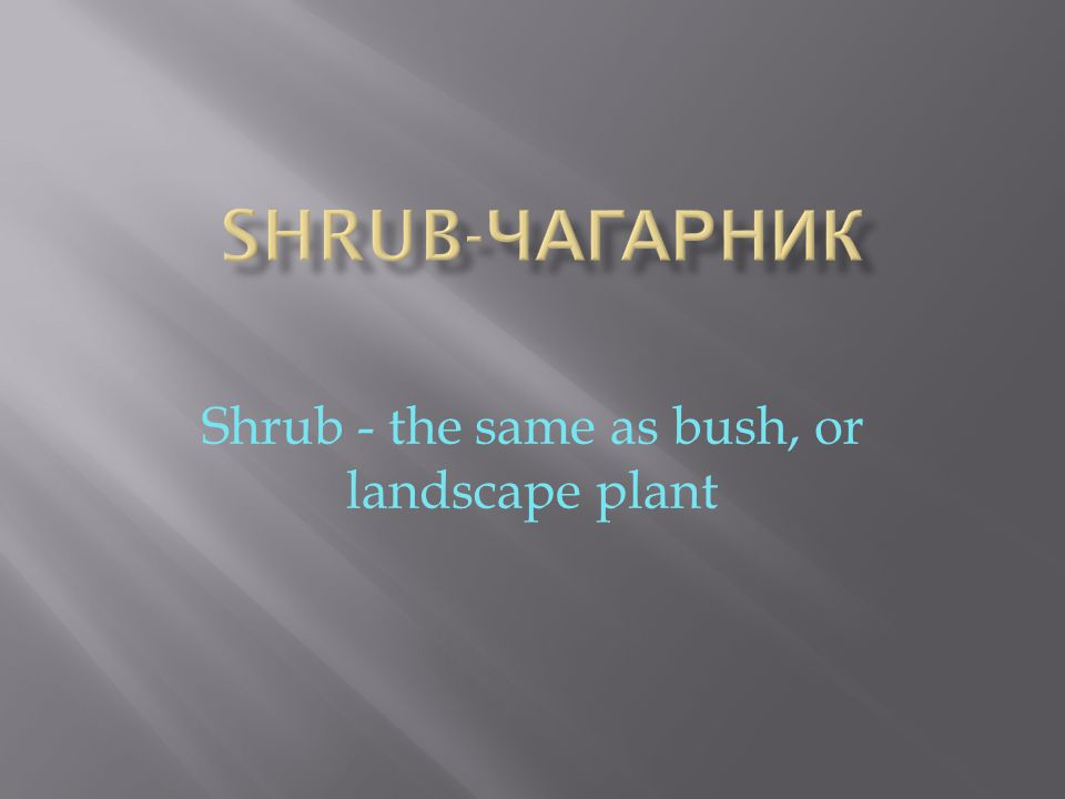 Shrub - the same as bush, or landscape plant