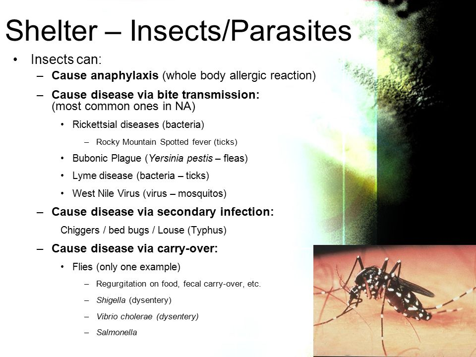 Insects can: –Cause anaphylaxis (whole body allergic reaction) –Cause disease via bite transmission: (most common ones in NA) Rickettsial diseases (bacteria) –Rocky Mountain Spotted fever (ticks) Bubonic Plague (Yersinia pestis – fleas) Lyme disease (bacteria – ticks) West Nile Virus (virus – mosquitos) –Cause disease via secondary infection: Chiggers / bed bugs / Louse (Typhus) –Cause disease via carry-over: Flies (only one example) –Regurgitation on food, fecal carry-over, etc.