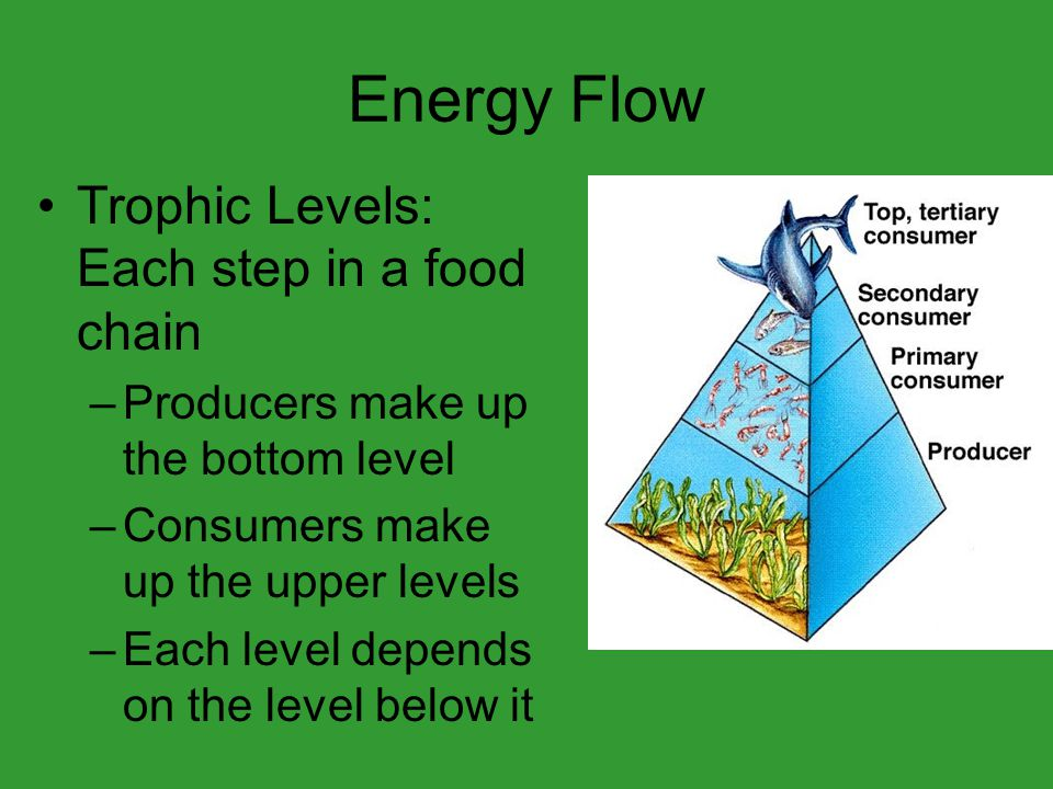 Energy Flow Trophic Levels: Each step in a food chain –Producers make up the bottom level –Consumers make up the upper levels –Each level depends on the level below it