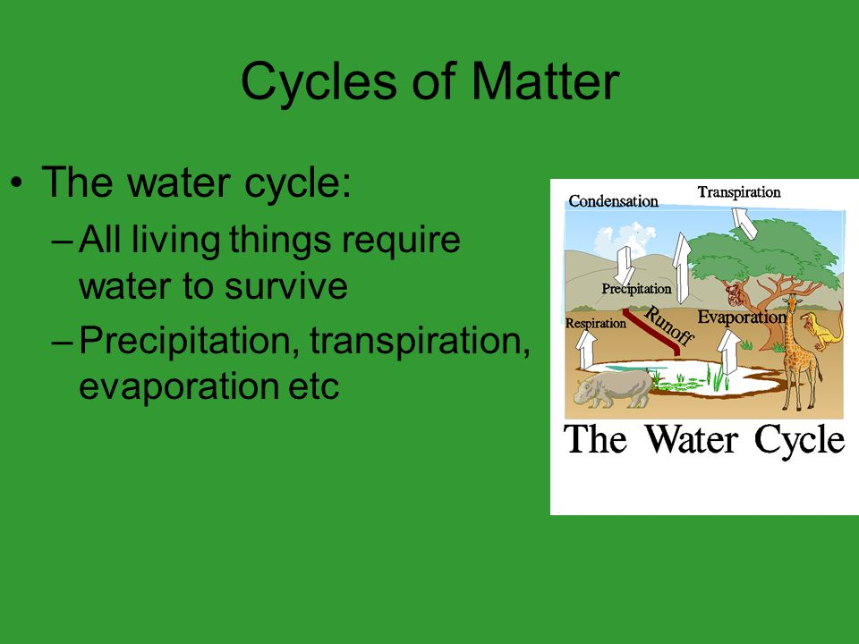 Cycles of Matter The water cycle: –All living things require water to survive –Precipitation, transpiration, evaporation etc