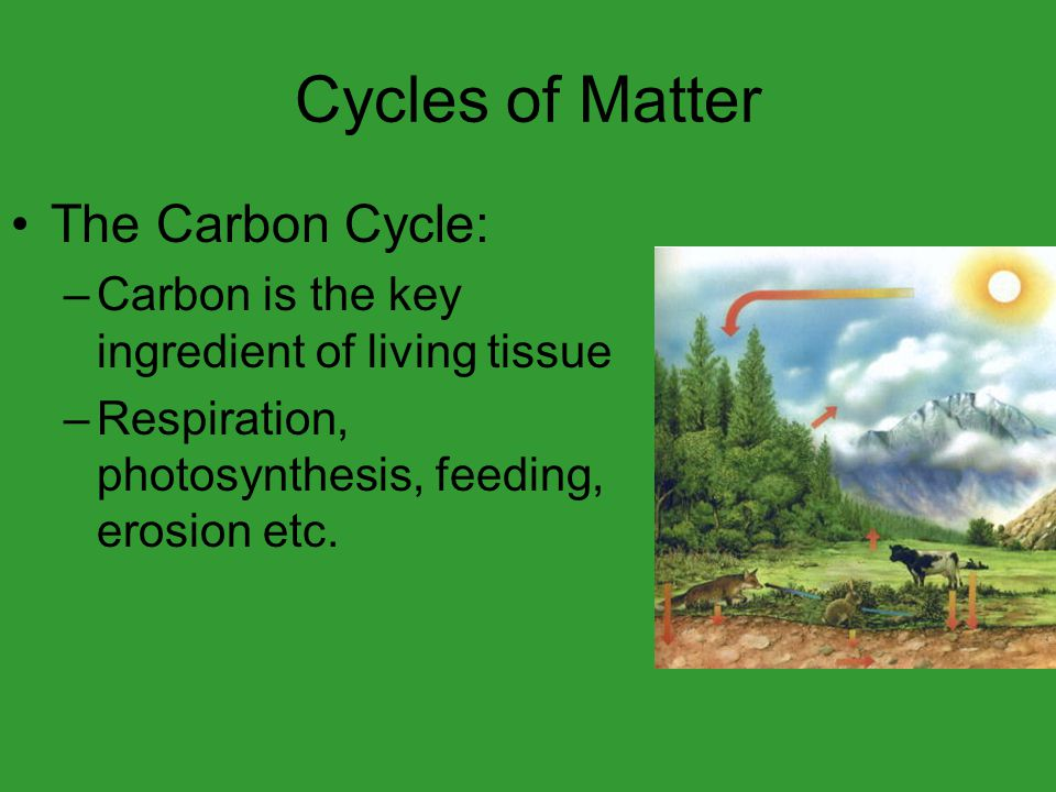 Cycles of Matter The Carbon Cycle: –Carbon is the key ingredient of living tissue –Respiration, photosynthesis, feeding, erosion etc.