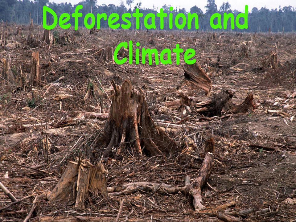Forests Being Cut Vastly Faster Than They Can Grow Tropical deforestation, as countries scramble to sell off their timber and clear cut so they can grow cattle (and soybeans, sugar), accounts for nearly 20% of carbon emissions (Canadell et al.
