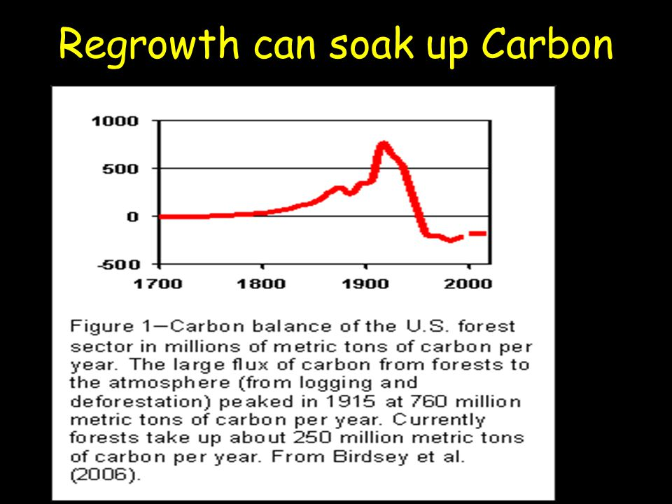 Regrowth can soak up Carbon