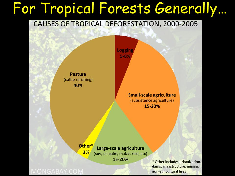 For Tropical Forests Generally…