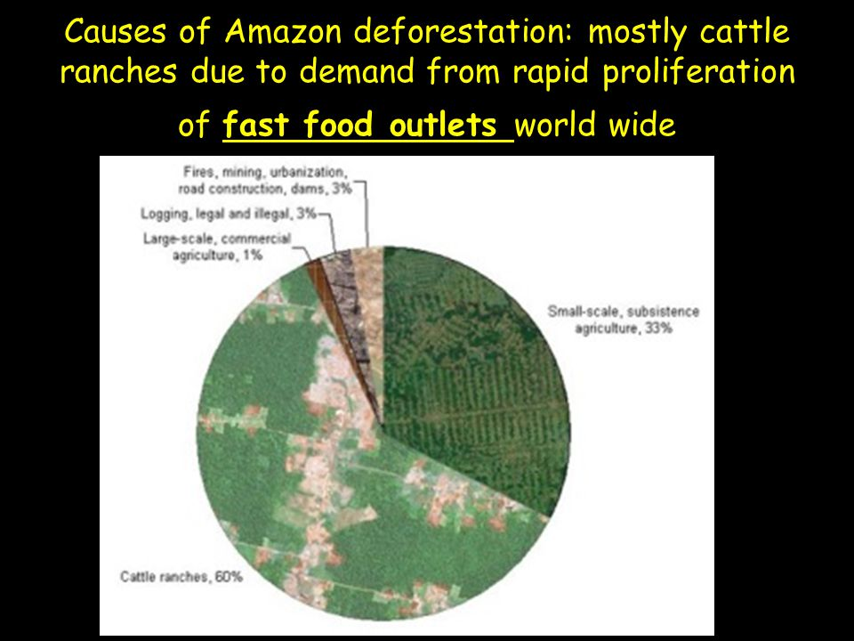 Causes of Amazon deforestation: mostly cattle ranches due to demand from rapid proliferation of fast food outlets world wide