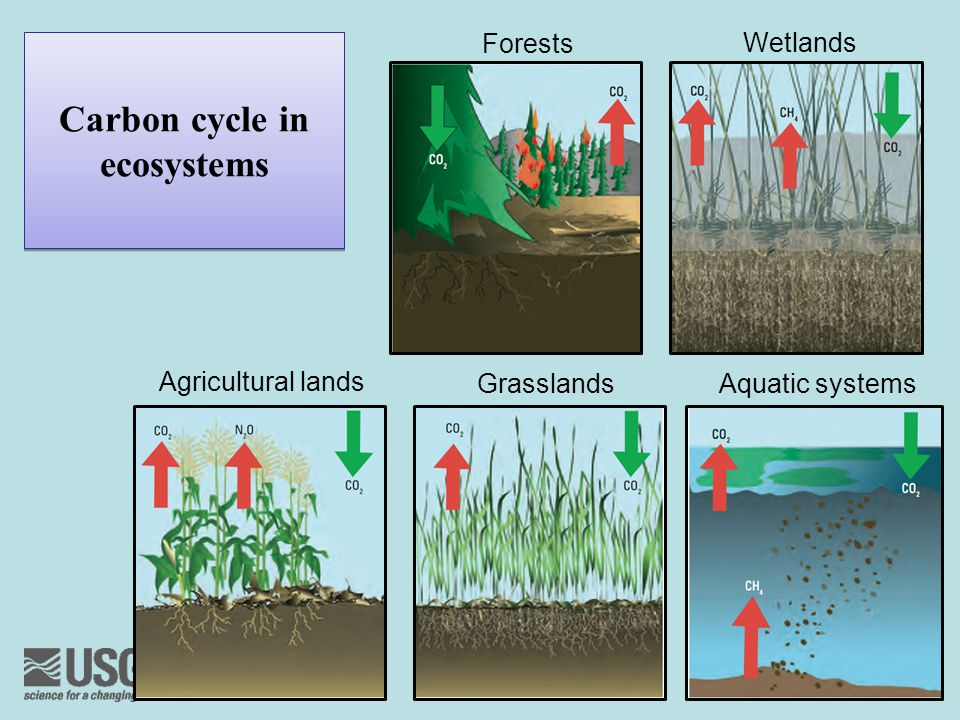 Carbon cycle in ecosystems Forests Wetlands Agricultural lands GrasslandsAquatic systems