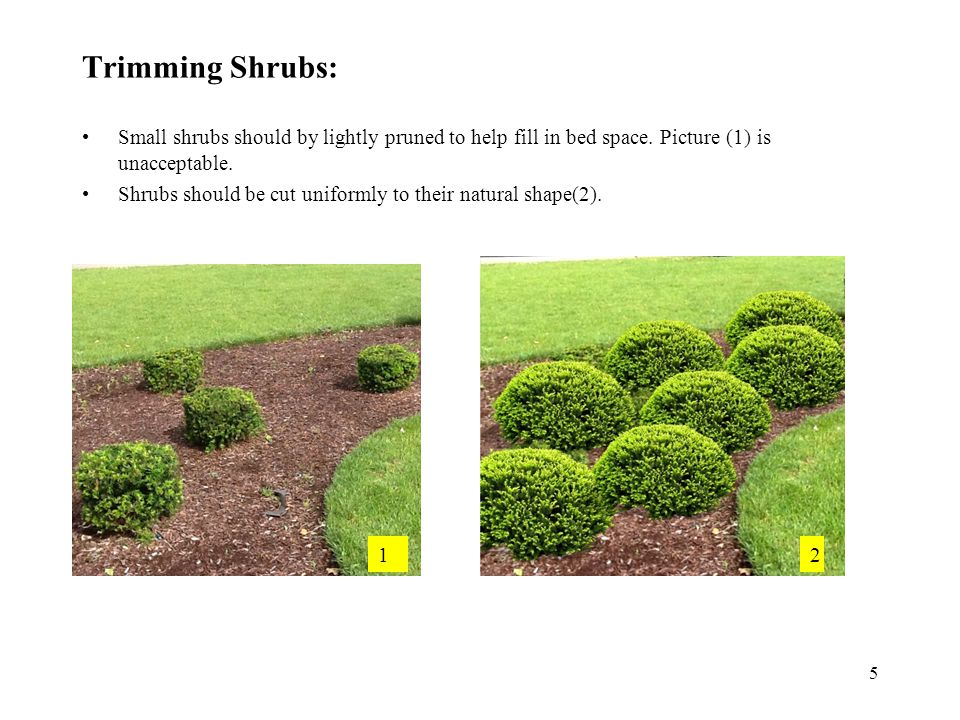 Dead Shrubs: If shrub shows signs of damage or decay, an email should be submitted to Thorntons for removal or repair (1).