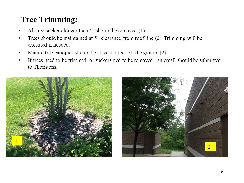 Tree Trimming: All tree suckers longer than 4 should be removed (1).