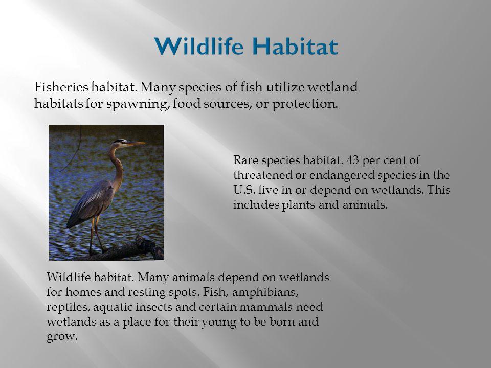 Fisheries habitat.