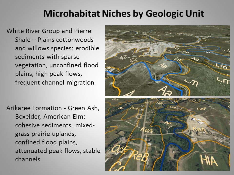 White River Group and Pierre Shale – Plains cottonwoods and willows species: erodible sediments with sparse vegetation, unconfined flood plains, high