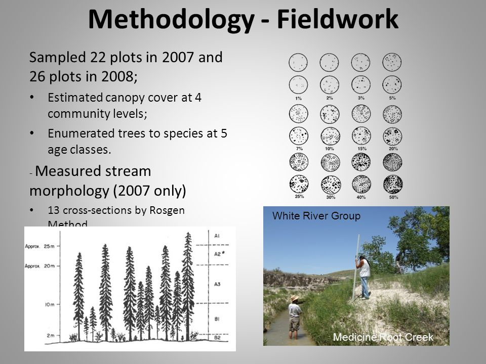 Methodology - Fieldwork Sampled 22 plots in 2007 and 26 plots in 2008; Estimated canopy cover at 4 community levels; Enumerated trees to species at 5