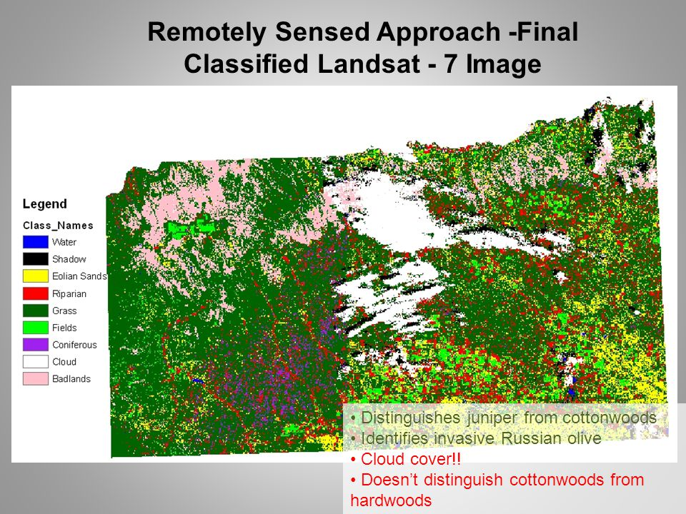 Remotely Sensed Approach -Final Classified Landsat - 7 Image Distinguishes juniper from cottonwoods Identifies invasive Russian olive Cloud cover!! Do
