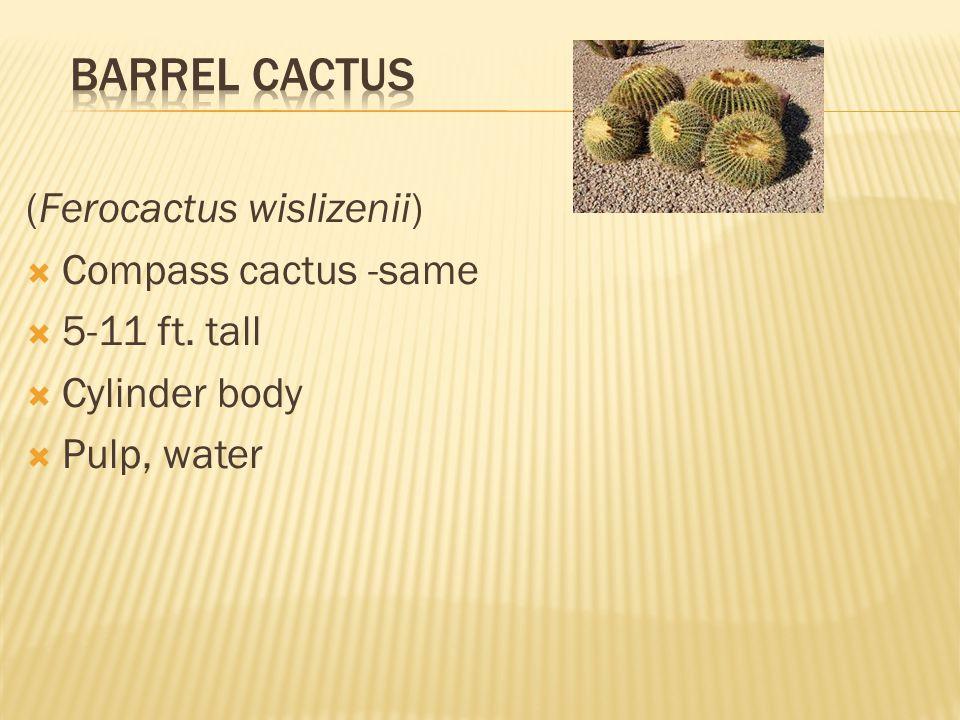(Ferocactus wislizenii)  Compass cactus -same  5-11 ft. tall  Cylinder body  Pulp, water