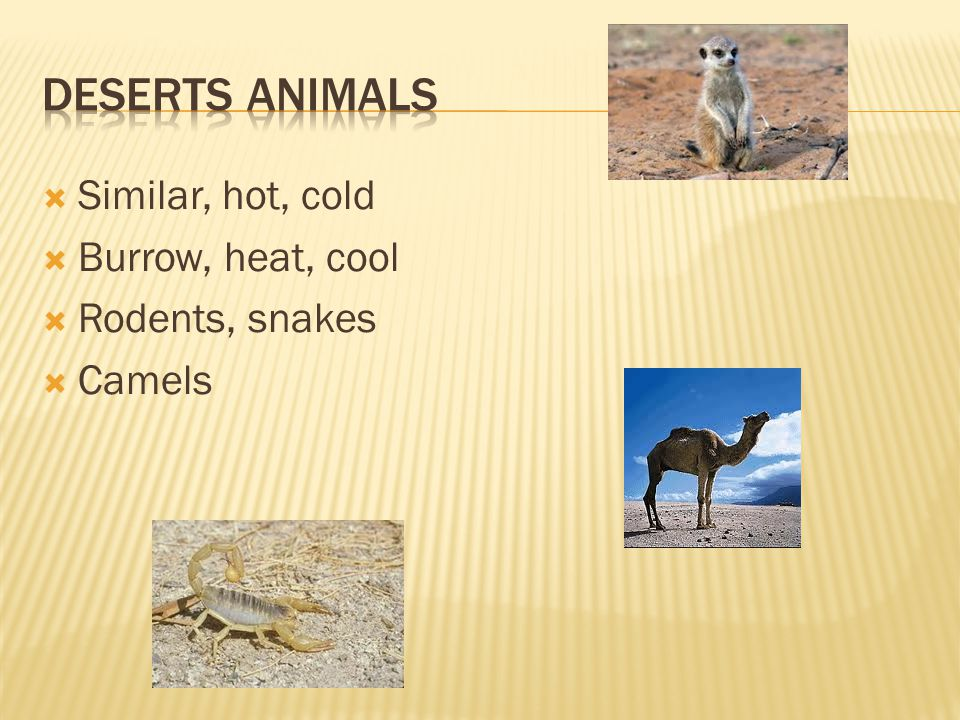  Similar, hot, cold  Burrow, heat, cool  Rodents, snakes  Camels