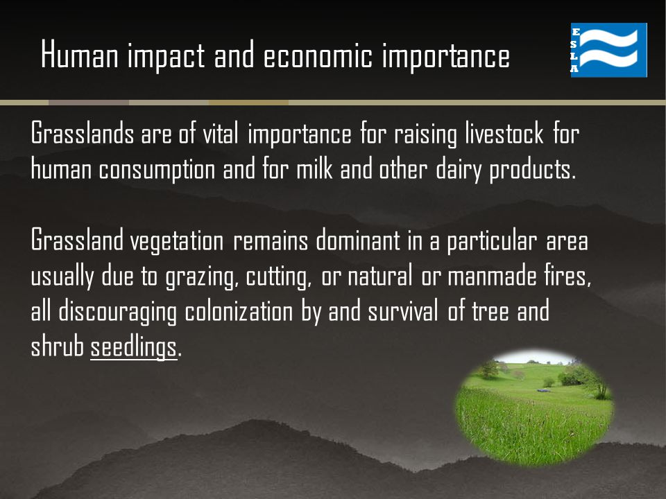 Grasslands are of vital importance for raising livestock for human consumption and for milk and other dairy products.