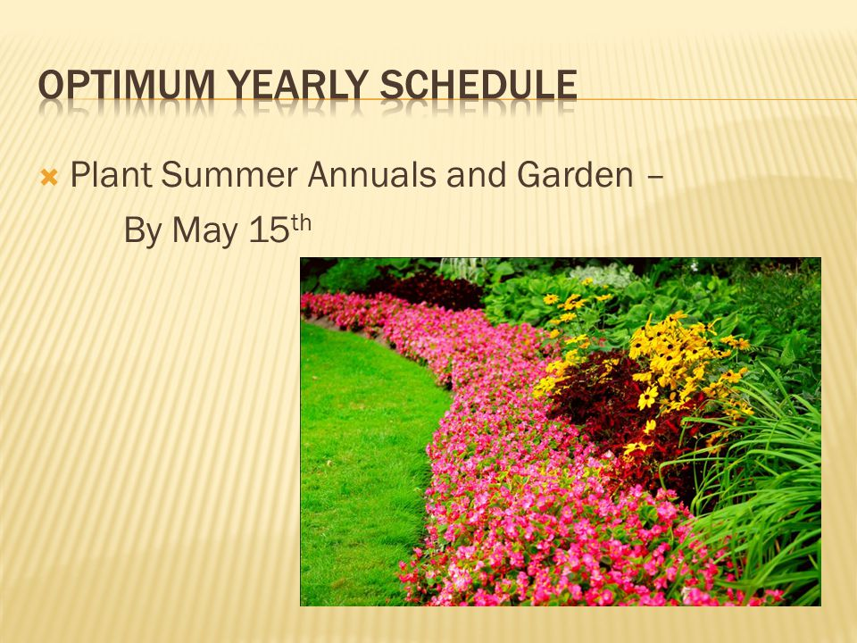  Plant Summer Annuals and Garden – By May 15 th