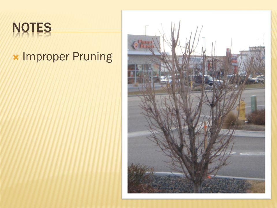  Improper Pruning