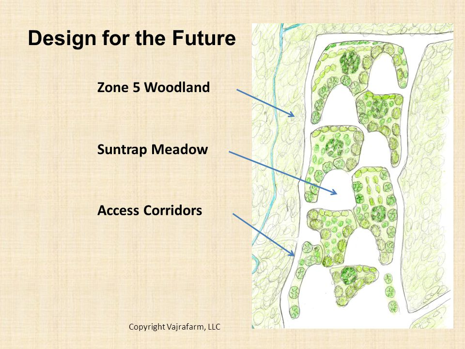 Design for the Future Access Corridors Suntrap Meadow Zone 5 Woodland Copyright Vajrafarm, LLC